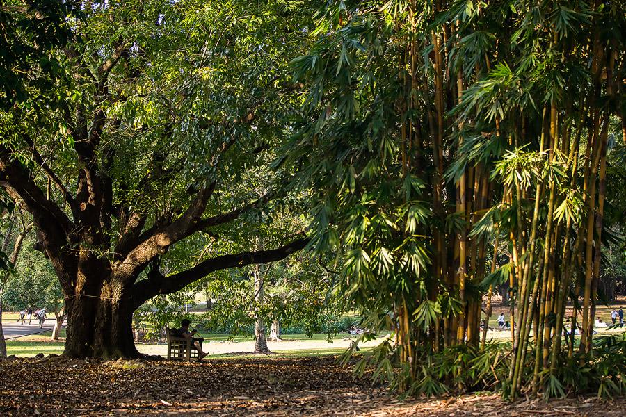 Botanic-garden – 12